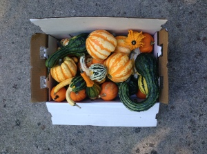 My big box of gourds. I thought this would be more than enough. Was I wrong...